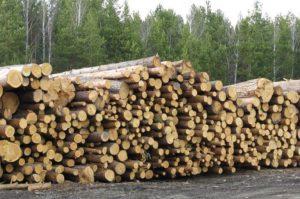 Как бесплатно получить лес на строительство дома — возможно ли это?